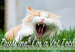 trust me i'm a vet tech